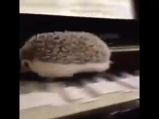 Ёжик-пианист