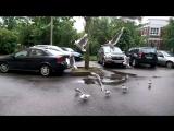 Жадные тупые чайки жрут хлеб в полёте в слоу-мо (240 кадров/с)