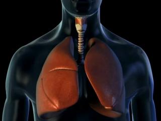 Аускультация лёгких_ бронхиальное дыхание