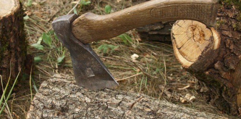 В Зеленчукском районе вырубили более 80 деревьев «пихты кавказской»