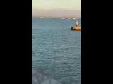 Дельфины на переправе