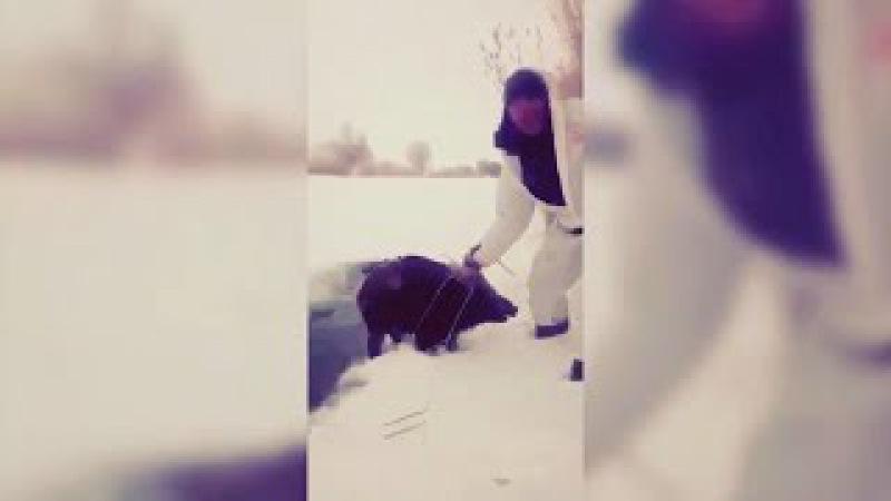 В Якутии ОХОТНИК голыми руками СПАС тонущих в проруби КАБАНОВ
