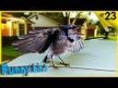 Смешные Птицы и Умные Птицы - Видео подборка приколов | Funny Bird Videos