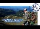 ГОРНАЯ ОХОТА НА КАМЧАТСКОГО БАРАНА Mountain hunting in Kamchatka