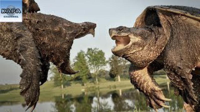13 SỰ THẬT Về Loài Động Vật Chậm Chạp Nhất Quả Đất - KAPA Channel