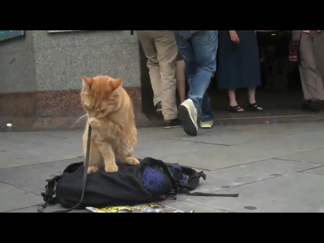 James and Bob the Big Issue cat (gap-themind.livejournal.com)
