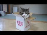 Большой любитель маленьких коробок