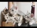 Котята в синхроне
