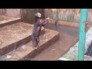 В Индонезии голодающие медведи шокировали посетителей зоопарка