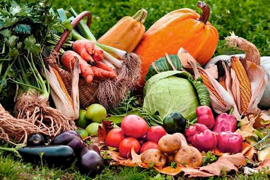 Посадка и выращивание различных овощей