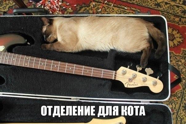 Рок-кот