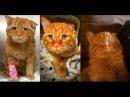 Пара забрала из приюта самого печального кота, чтобы сделать его счастливым!
