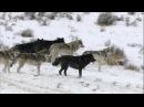 Александр Тафинцев и Александр Самойлов - Тамбовский волк