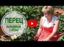 Выращивание перца ➡ Уход и подкормка во второй половине лета 🌟 Полезные советы...