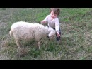 Cute sheep with a child playing