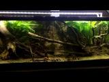 Amazon Biotope aquarium with Altum Orinoco F3