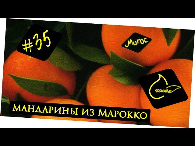 Сезонные мандарины из Марокко | Обзор фруктов Андрей_Счастье сыроедение фрукторианство raw