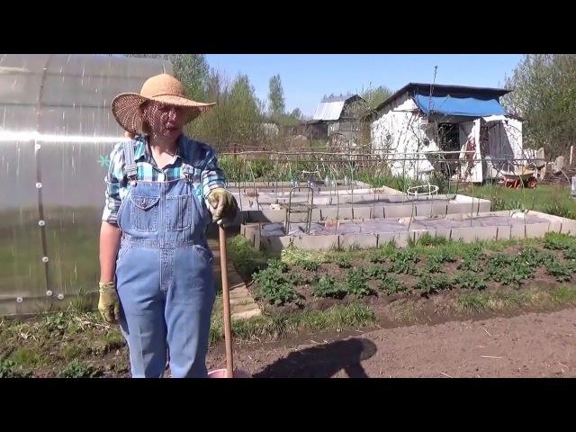 Посадка картофеля в гребни Природное земледелие