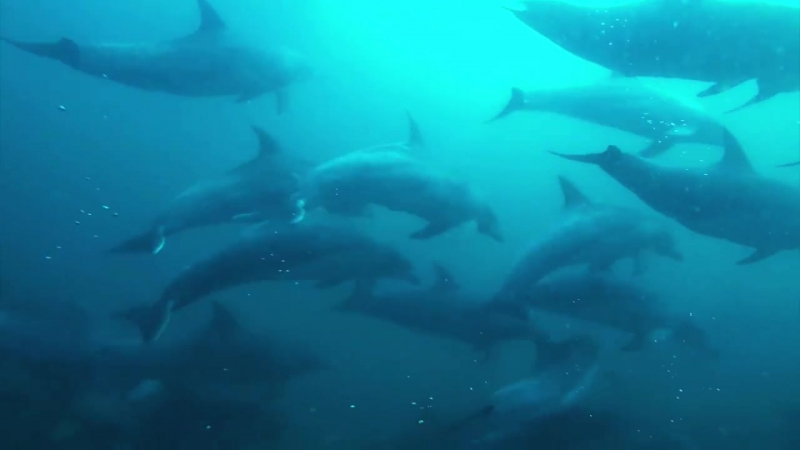 The Bottlenose Capital Of The World Scuba Diver Life