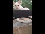 Кот с человеческим лицом 1
