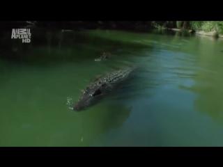 Планета Мутантов Австралия. Невероятные Животные Нашей Планеты! Animal Planet дикий мир и поведение животных в нем