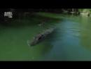 Планета Мутантов Австралия Невероятные Животные Нашей Планеты Animal Planet дикий мир и поведение животных в нем
