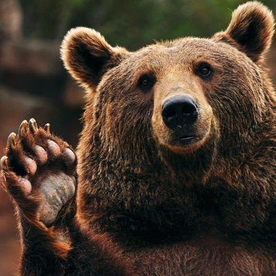 Егор Медведьев