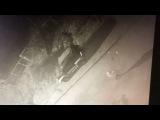 Нападение пиздюков на Mitsubishi Pajero Junior  #crazy_vdk