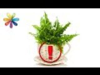 Какие комнатные растения вызывают головную боль и бессонницу? – Все буде добре. ...