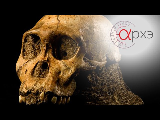 Александр Марков: Введение в эволюцию человека fktrcfylh vfhrjd: ddtltybt d 'djk.wb. xtkjdtrf