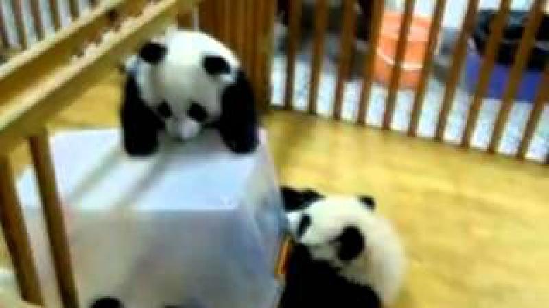 Панда непоседа