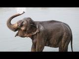 Приколы про животных! Маленькие слонята купаются в бассейне и на море!