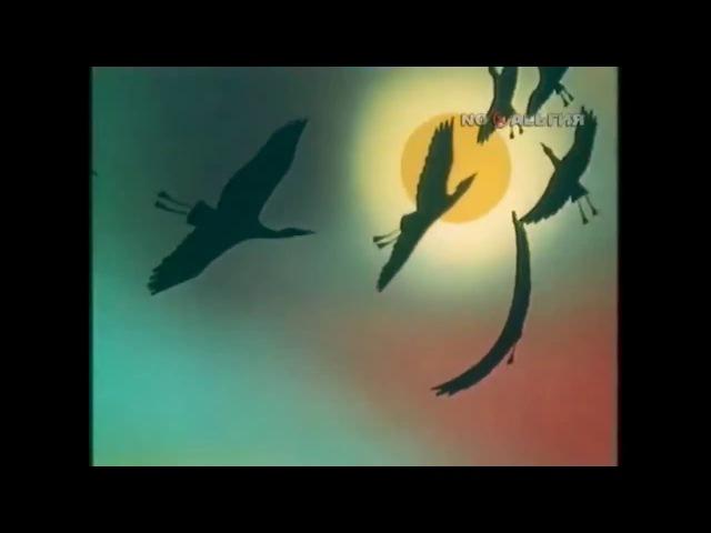 В мире животных — заставка. Музыка в мире животных. Любимая передача детства. » Freewka.com - Смотреть онлайн в хорощем качестве