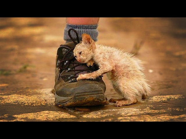 Спасение котенка и Проверка на прочность человечность людей. Добрые новости 3