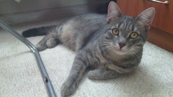 Ребят,внимание! Хочу отдать кота. Зовут Малыш,ему 8 месяцев. Очень игр