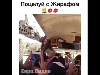 Зоофилка ? ????Ставьте лайки⬇️Отмечайте друзей#... Москва 06.08.2017