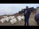 Индюки, Слава Украине!