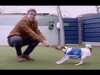 #Londonблог Кто и как помогает бездомным животным в Британии