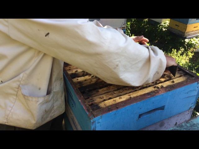 Инкубатор. Формирование инкубатора для маточников из пчелиной семьи