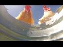 Камера на дне снимает животных, которые подходят попить.