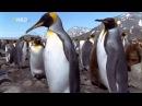 Самые странные в мире животные - чудаки в океане.  Документальный фильм National Geographic