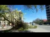 Ветер ломает деревья в Армавире 19.04.17 Мкр. Родина (ул. Новороссийская)