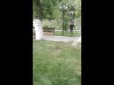 паркте ерыгп журген