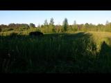 поле 2017 -хомячим траву