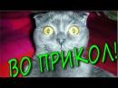 Смешные коты и Забавные кошки Приколы с Котами 2017, ПРОБУЙ НЕ СМЕЯТЬСЯ FUNNY CATS Compilati...