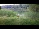 На пробежке попался молодой олень, подпустил очень близко