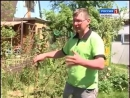 Как бороться с сорняками и приготовить удобрения Урожайные грядки. Дача