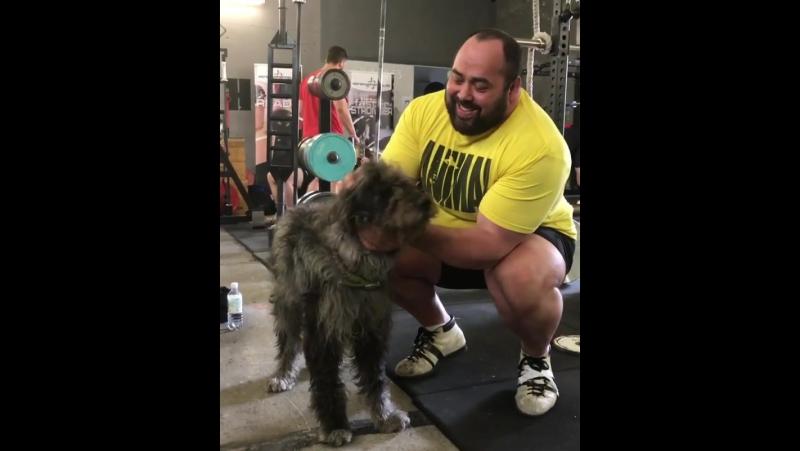 Малан и собака