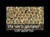Из чего на самом деле делают сигареты? Как бросить курить.