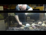 Takashi Amano Tribute Aquascape by James Findley Pebbles In the Footsteps of a